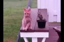 人間っぽい座り方の猫