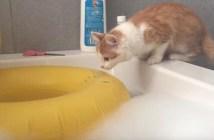 浮き輪の誘惑に負けてしまった猫