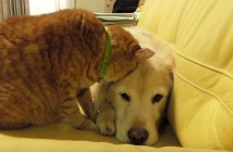 犬に顔をうずめる猫