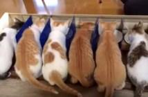 半個室でご飯を食べる子猫
