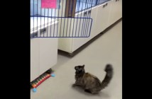 ジャンプできない猫