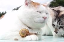 カタツムリを手の上に乗せる猫