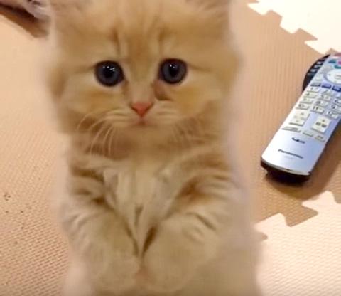 腹ペコ子猫