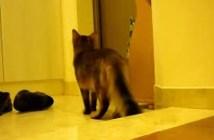 お留守番する猫