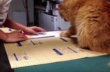 猫社長の熱血指導