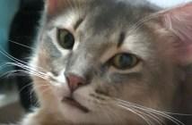 やきもち焼きの猫