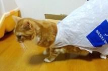 ビニール袋にハマった猫