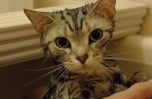 猫がお風呂に入って乾くまで