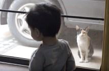 男の子とお話しする猫