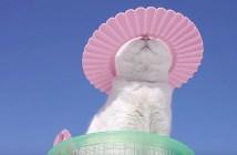 シャンプーハットを被る猫