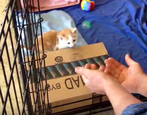 子猫に手を出すと