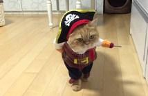 海賊になりきる猫