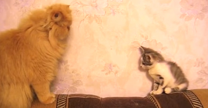 向かい合い大人猫と子猫