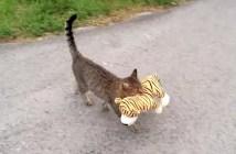 トラのぬいぐるみを借りてくる猫