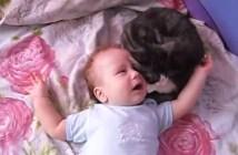 赤ちゃんに対して優しい猫