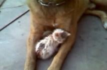 子猫の母親は犬
