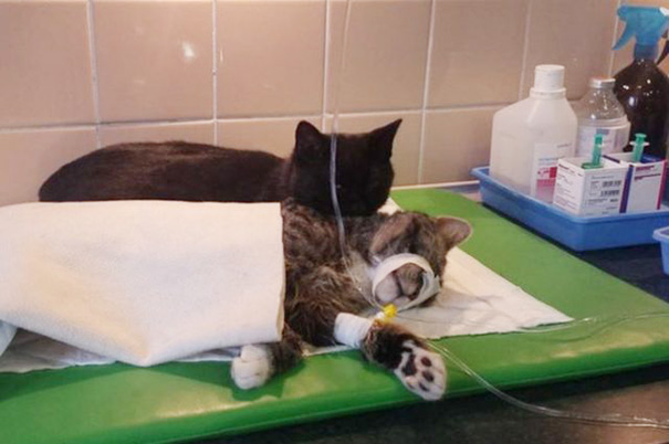 危険な状態の猫に寄り添う黒猫