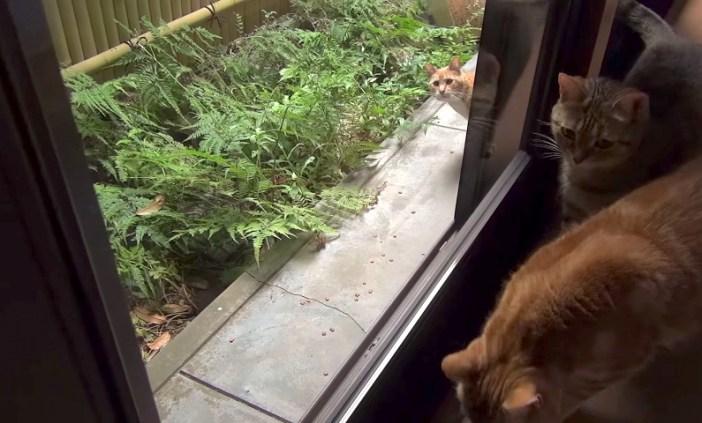 庭に現れた猫