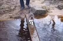 肉球を濡らしたくない猫