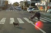 横断歩道でおばあちゃんを気遣う猫