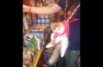 ショッピングをする猫