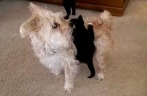 犬にしがみつく子猫