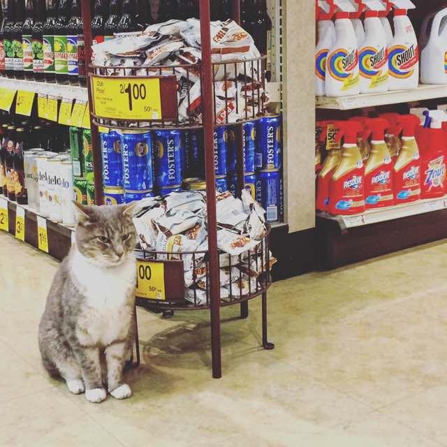 毎日スーパーに通う猫