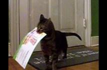 手紙を受け取る猫