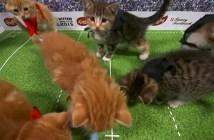 子猫のワールドカップ