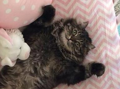 ベッドで横になって満足している猫