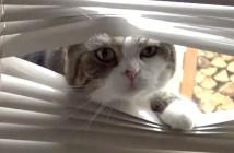 ブラインドから強引に出てくる猫