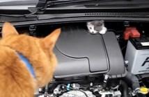 エンジンルームから子猫を救出