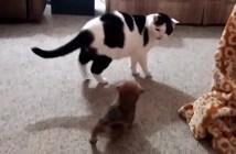 猫とお友達になりたい子犬