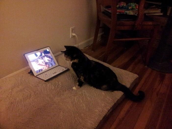 亡くなった犬のDVDを見る猫