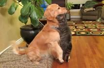 犬にハグする猫