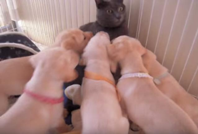大困惑の猫