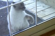 前足で連続ノックする猫