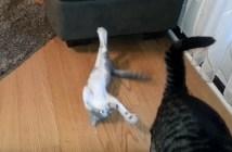 ソファーの影から攻撃を繰り返す子猫