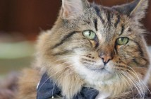 世界最高齢の猫