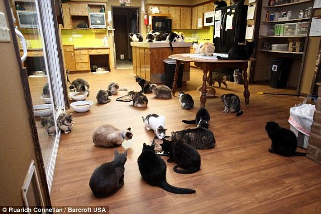 キッチンいっぱいの猫