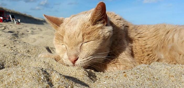 砂浜で眠る猫