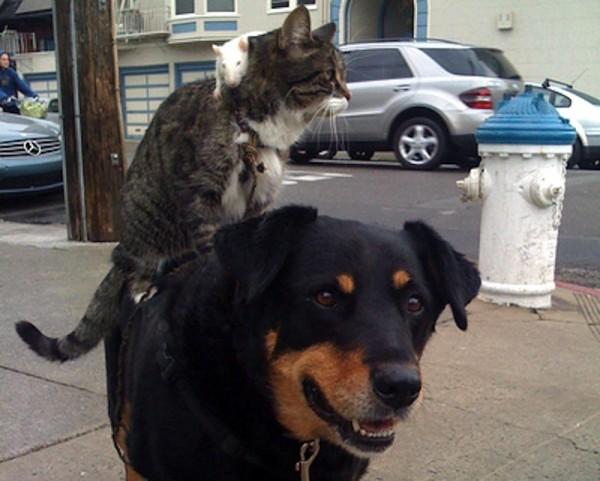 犬の上に乗る猫とネズミ