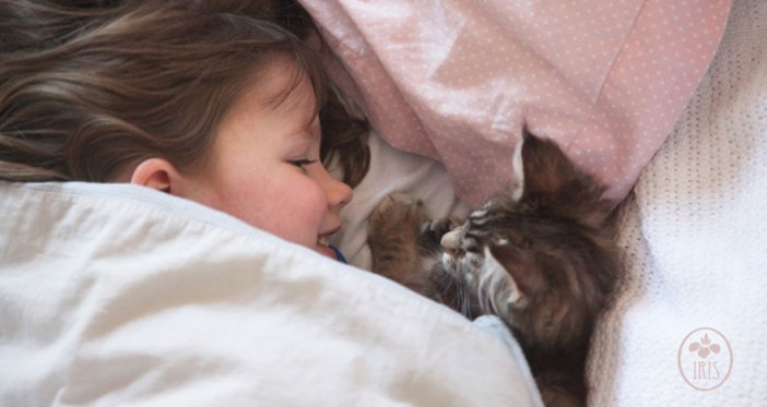 いっしょに眠る猫と少女