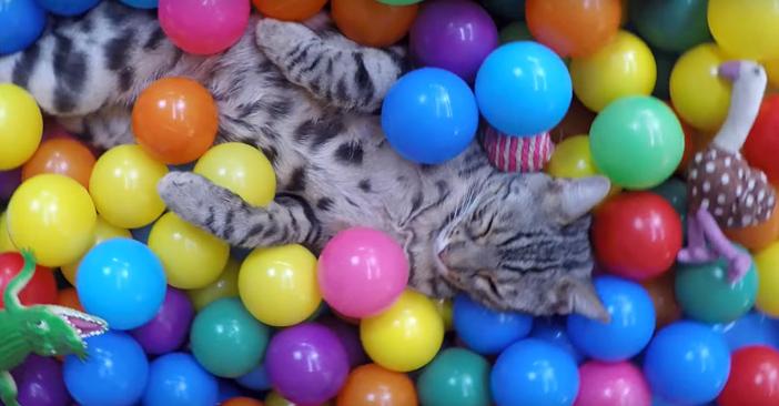 ボールに埋もれて眠り始める猫