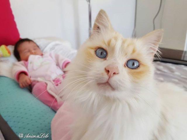 赤ちゃんを守る猫