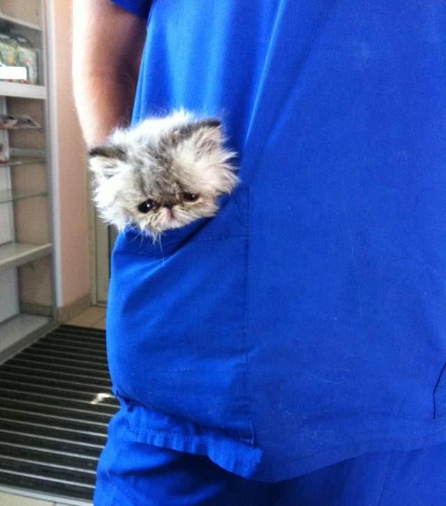 ポケットに収まる猫