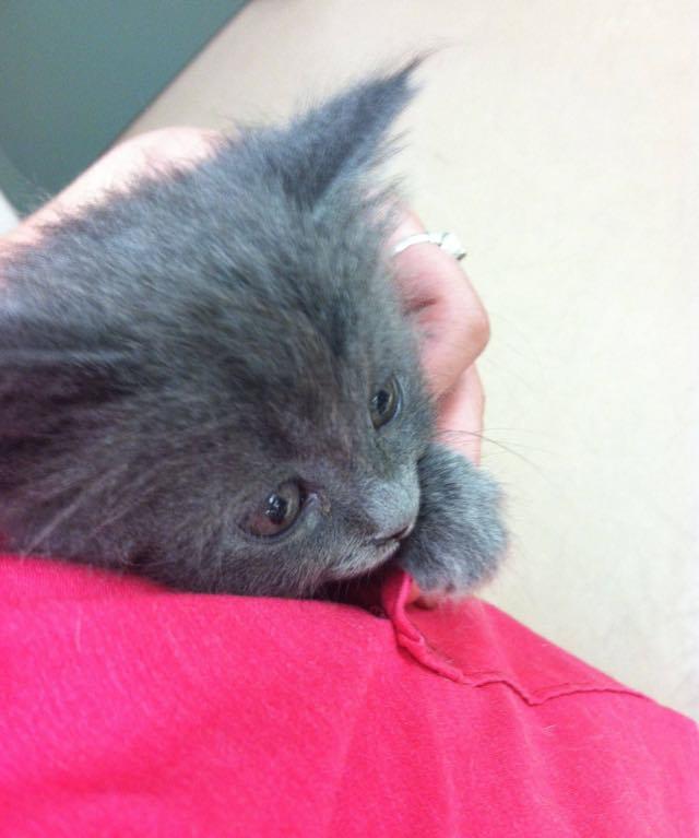 獣医さんのポケットでグッスリと眠る子猫
