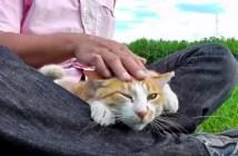 河原暮らしの猫