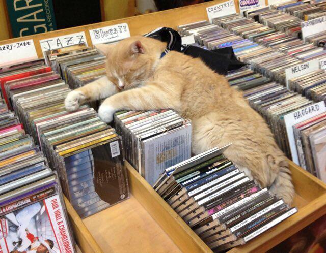 CDの隙間で眠る猫