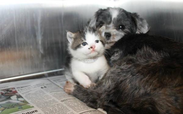 子猫を抱く犬